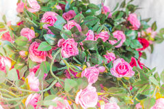 Roses on white background of blur. Royalty Free Stock Images