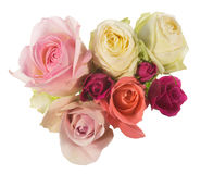 Roses in a white background Stock Photos