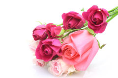 Roses in a white background Royalty Free Stock Photos