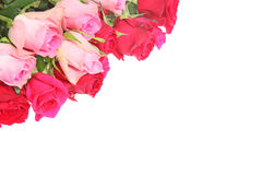 Roses in a white background Royalty Free Stock Image