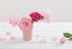 Roses on white background Stock Image