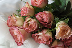 Roses on a white dress. Bouquet of pink roses on a white dress Stock Photos
