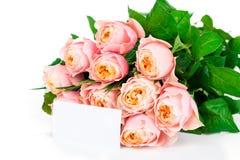 Roses on white. Fresh roses on white background Stock Photography