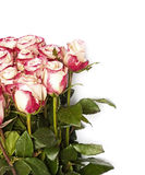 Roses, on the white royalty free stock photo