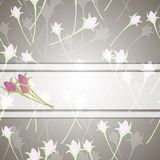Roses and white ribbon Royalty Free Stock Photos