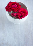 Roses in the white round plate Royalty Free Stock Photography