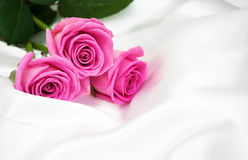 Roses on white silk background Stock Images