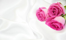 Roses on white silk background Stock Image