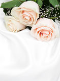 Roses on white silk background Royalty Free Stock Images