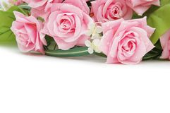 Roses on the white   - use cop Stock Photo
