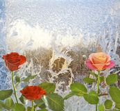 Roses on window frosty pattern Royalty Free Stock Image