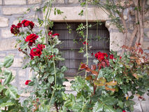 Roses and window Stock Image