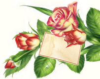 Roses With Empty Tag Fine Illustration Royalty Free Stock Photography