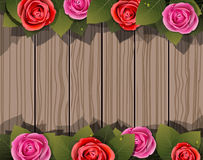 Roses on a wooden background Stock Images