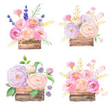 Roses in wooden box Royalty Free Stock Photography