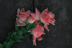Roses on a wooden floor Stock Image