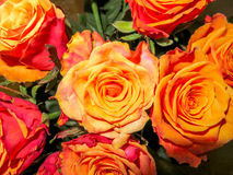 Roses yellow background Royalty Free Stock Photography