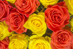 Roses - yellow background Royalty Free Stock Photography