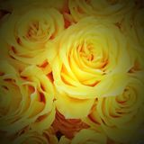Roses. Yellow bouquet of roses Stock Photo
