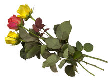 Roses - yellow and red isolated Royalty Free Stock Photography