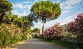 Roseto degli Abruzzi, Abruzzo, Italien, juni 15, 2016: Den Roseto deglien Abruzzi är också bekant som den rosa `en för `-Lido del Royaltyfri Bild