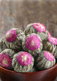 Rosetones florecientes del té Imagenes de archivo