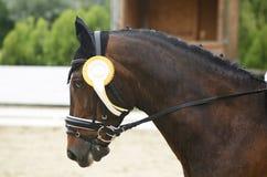 Rosetta premiata di Fiirst in una testa del cavallo di dressage Fotografie Stock Libere da Diritti