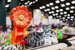 Rosette at a cat show. Orange rosette award for Best of Variety at a cat show Royalty Free Stock Photos