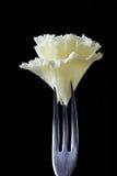 Rosette da especialidade Tete de Moine do queijo suíço Imagens de Stock Royalty Free
