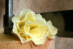 Rosette de fromage suisse Tête de Moine image libre de droits
