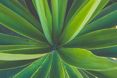 Rosette of Palm Tree Leaves Growing in Flower Shale. Beautiful Natural Geometrical Pattern. Vibrant Colors Trendy Hipster Toning. Background Wallpaper Poster Royalty Free Stock Photos