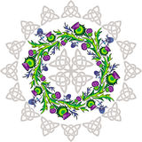 A rosette with thistle flowers and Celtic knots Stock Image