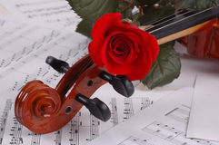 Roseviolin Stock Foto's
