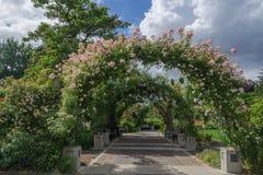 Owens Rose Garden, Eugene Oregon Roseway Arch Royalty Free Stock Image