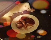 Rosie το κουνάβι στοκ εικόνες με δικαίωμα ελεύθερης χρήσης