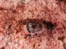 rosie глаза Стоковое Изображение RF