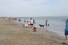 Rosie psa plaża Zdjęcia Stock