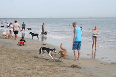 Rosie's Dog Beach Stock Photography