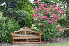 Rosier et un banc de jardin Photos libres de droits