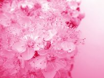 Rosige Blumenkarte Lizenzfreie Stockfotos