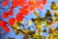 Rosja. Jesień. 28 Fotografia Stock