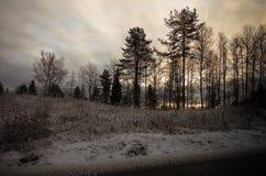 Rosja Karelian lasy w zimie Drzewa w śniegu Obrazy Stock