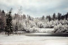 Rosja Karelian lasy w zimie Drzewa w śniegu Fotografia Royalty Free