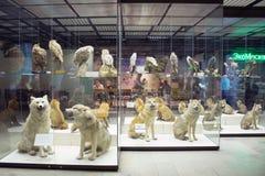 Rosja, Moskwa, Luty 21, 2017: Stanu Darwin muzeum faszerujący Obrazy Royalty Free