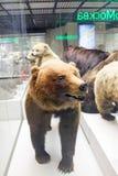 Rosja, Moskwa, Luty 21, 2017: Stanu Darwin muzeum Stuffe Zdjęcie Royalty Free