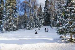 Rosja plateau Lago-Naki Adygeya, Styczeń, - 28 2017: dzieci i dorosłych przejażdżka na śnieżnym wzgórzu Pogodny zima dzień w moun Obraz Royalty Free