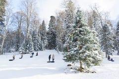 Rosja plateau Lago-Naki Adygeya, Styczeń, - 28 2017: dzieci i dorosłych przejażdżka na śnieżnym wzgórzu na saniu Drzewo dekorując Zdjęcie Stock