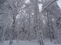 Rosja Podróż przez zimy Ural zdjęcie stock