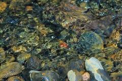 Rosja Rosyjska lasowa wiosna w Rosja piękna natura rzeka w zimie, piękni wzory, jasny woda Zdjęcie Stock
