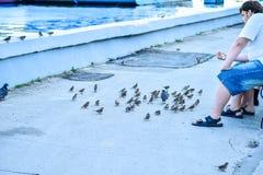 Rosja, Saratov - 09 08 2017: Niewiadomy mężczyzna siedzi na ławce i karmi gołębie na Volga Rzecznym bulwarze w Saratov 08 09 2017 Zdjęcie Royalty Free